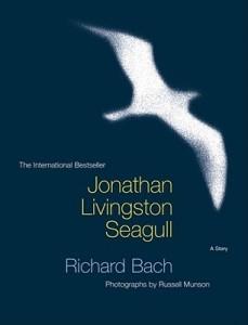 Jonathan Livingstone Seagull Image